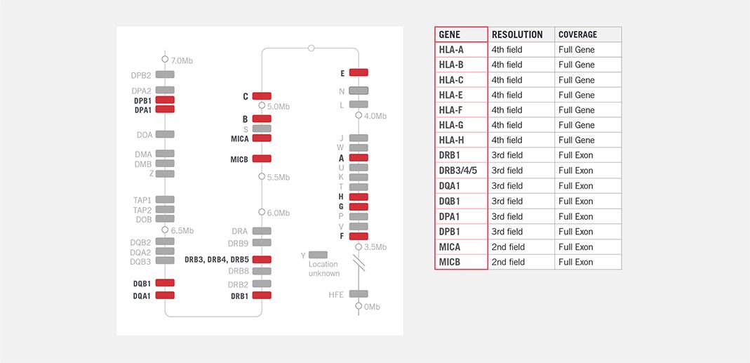 Demonstrates gene resolution coverage.